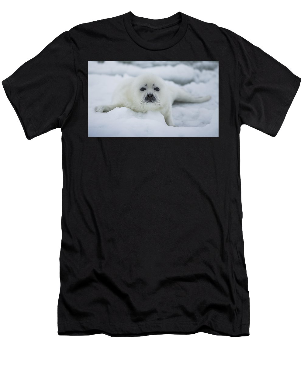 Canada Men's T-Shirt (Athletic Fit) featuring the photograph Harp Seal Pup by Katrina Martlew
