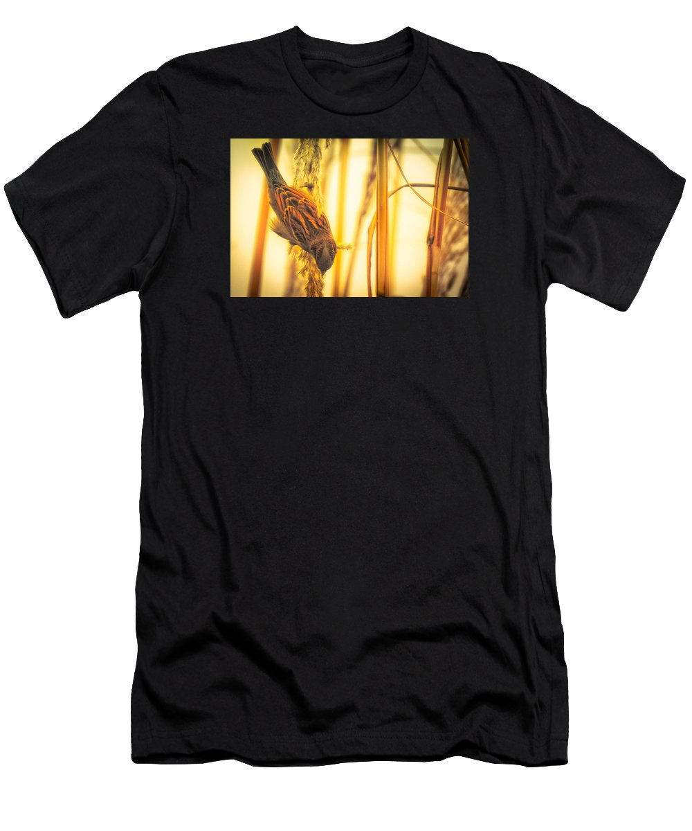 Birds Men's T-Shirt (Athletic Fit) featuring the photograph Harvest Time II by Trent Garverick