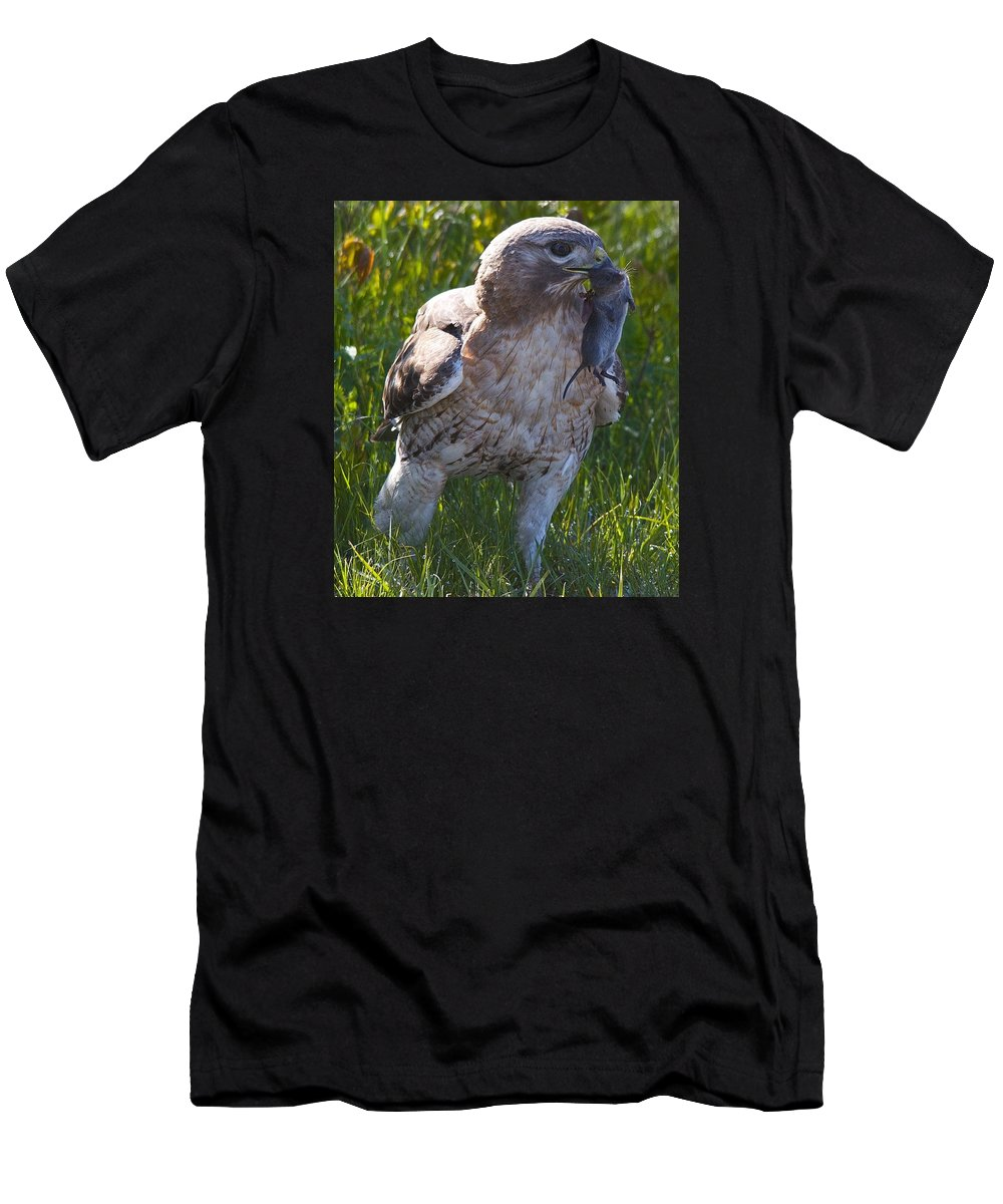 Wildlife Men's T-Shirt (Athletic Fit) featuring the photograph Hawk With Dinner by Christine Russell