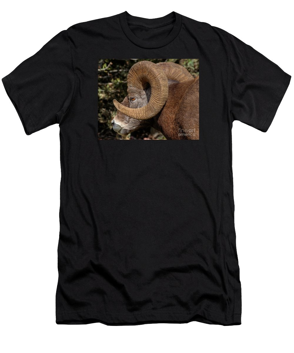 Radium Hot Springs Men's T-Shirt (Athletic Fit) featuring the photograph Heavy Horns by James Anderson