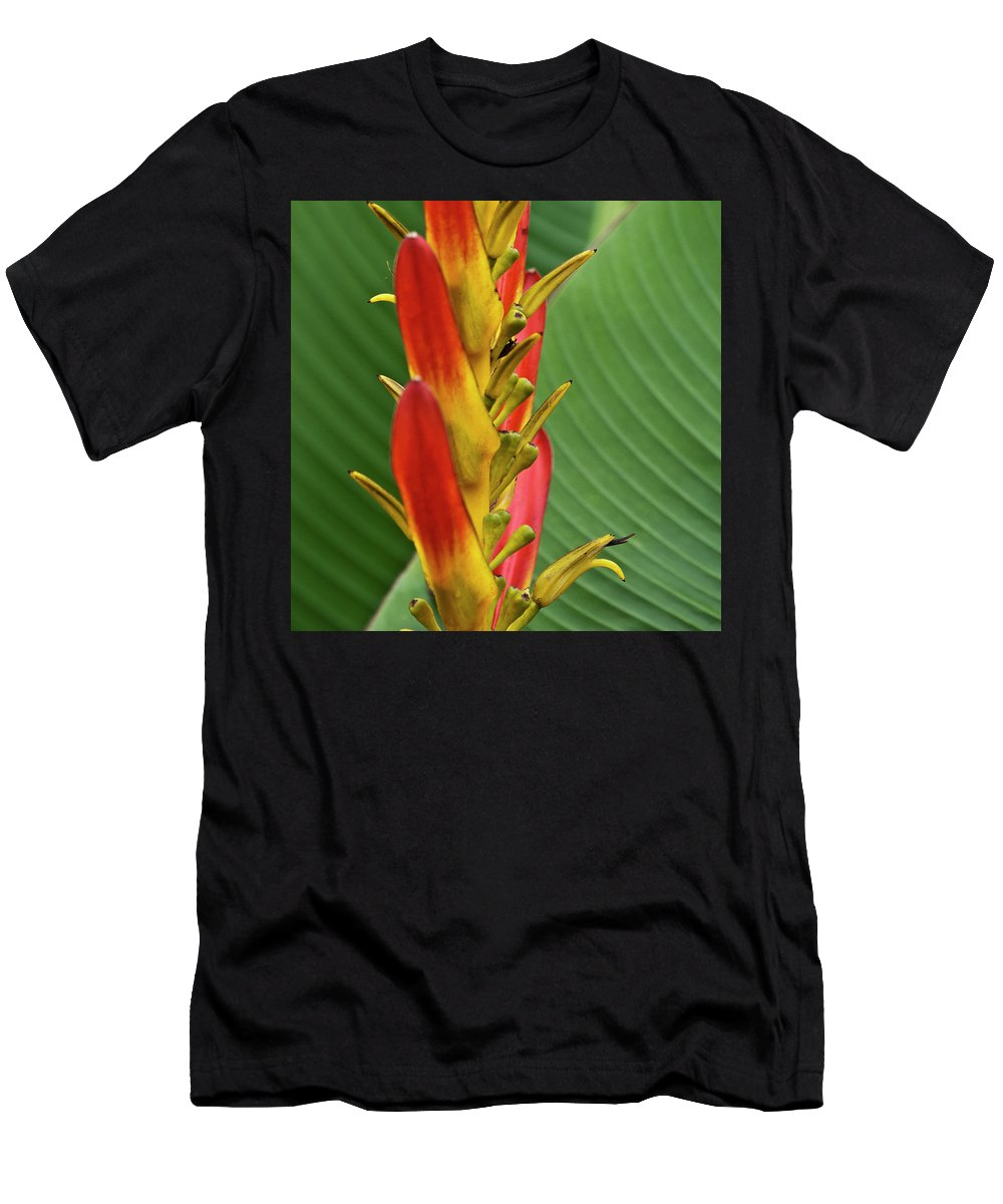 Heliconia Men's T-Shirt (Athletic Fit) featuring the photograph Heliconia by Heiko Koehrer-Wagner
