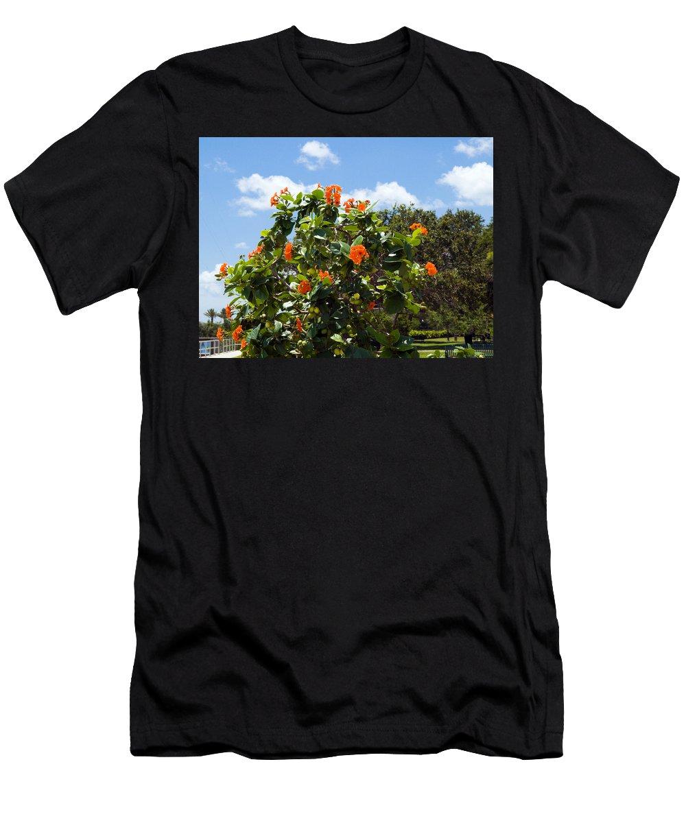 Hibiscus; Rosasinensis; Rosa; Sinensis; Rosa-sinensis; Tree; Bush; Shrub; Plant; Flower; Flowers; Fl Men's T-Shirt (Athletic Fit) featuring the photograph Hibiscus Rosasinensis With Fruit by Allan Hughes