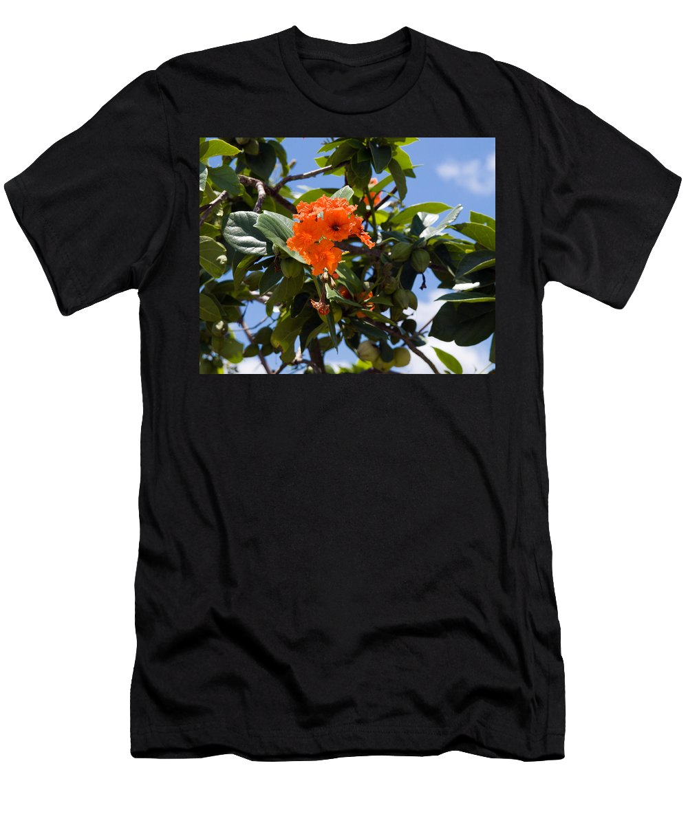 Hibiscus; Rosasinensis; Rosa; Sinensis; Rosa-sinensis; Tree; Bush; Shrub; Plant; Flower; Flowers; Fl Men's T-Shirt (Athletic Fit) featuring the photograph Hibiscus Rosasinensis With Fruit On The Indian River by Allan Hughes
