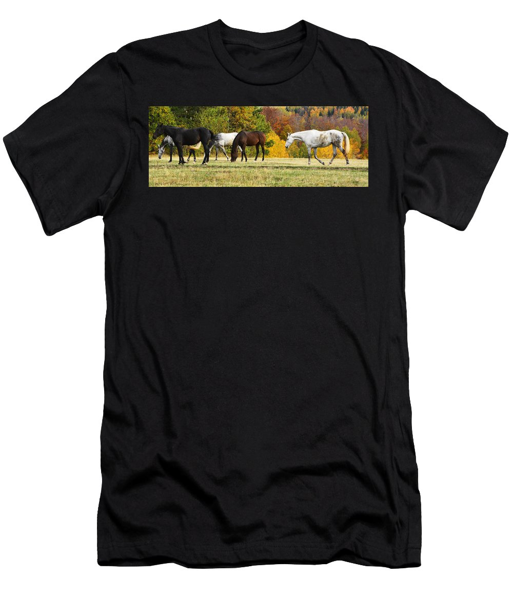 Autumn Men's T-Shirt (Athletic Fit) featuring the photograph Horses In Autumn by Predrag Lukic