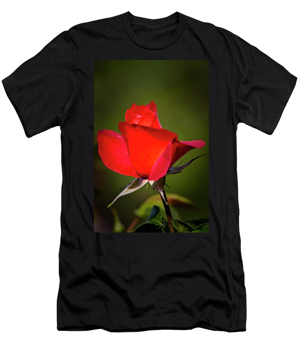 Garden Men's T-Shirt (Athletic Fit) featuring the photograph Hot Cocoa Rose by Albert Seger