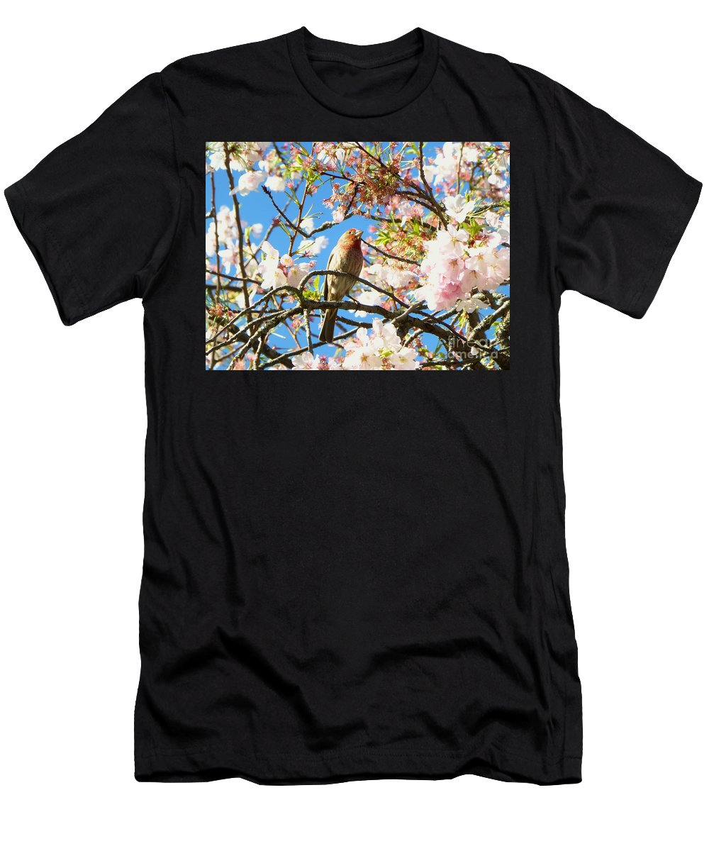 Cherry Tree Men's T-Shirt (Athletic Fit) featuring the photograph House Finch In The Cherry Blossoms by As the Dinosaur Flies Photography