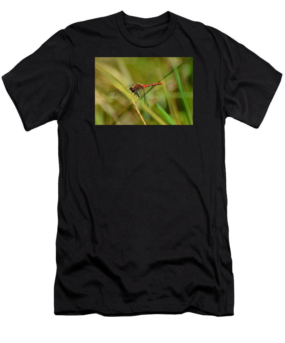 Hudsonian Whiteface Dragongfy Men's T-Shirt (Athletic Fit) featuring the pyrography Hudsonian Whiteface Dragonfly by Sally Sperry