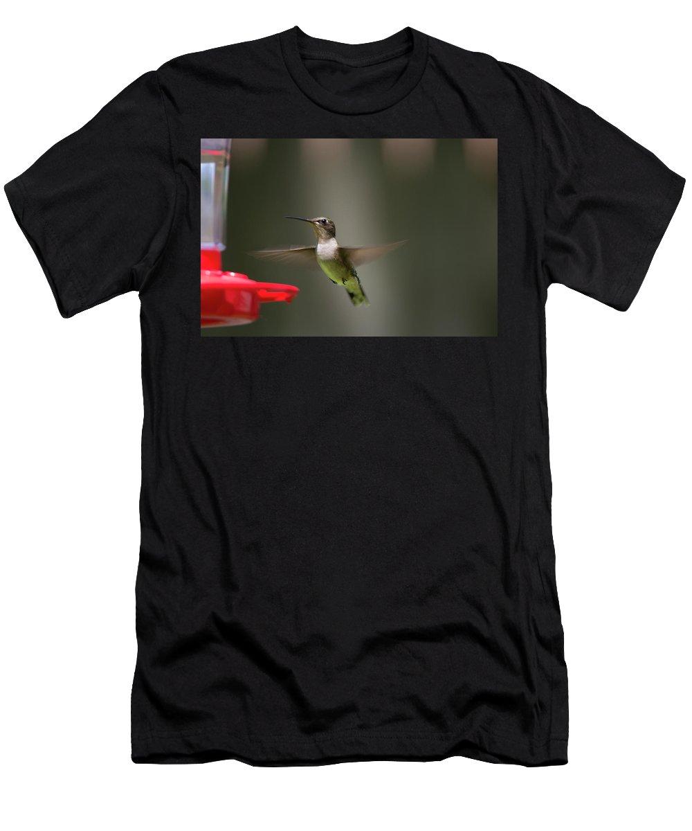 Bird Men's T-Shirt (Athletic Fit) featuring the photograph Humming Bird 11 by David Stasiak