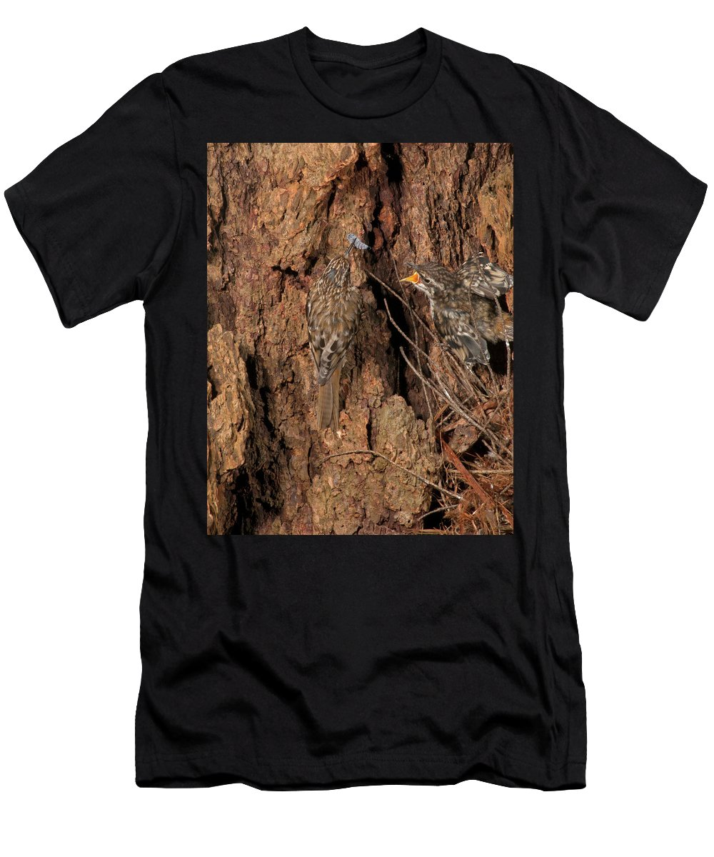 Portrait Men's T-Shirt (Athletic Fit) featuring the photograph Hungry Creeper by Damon Calderwood