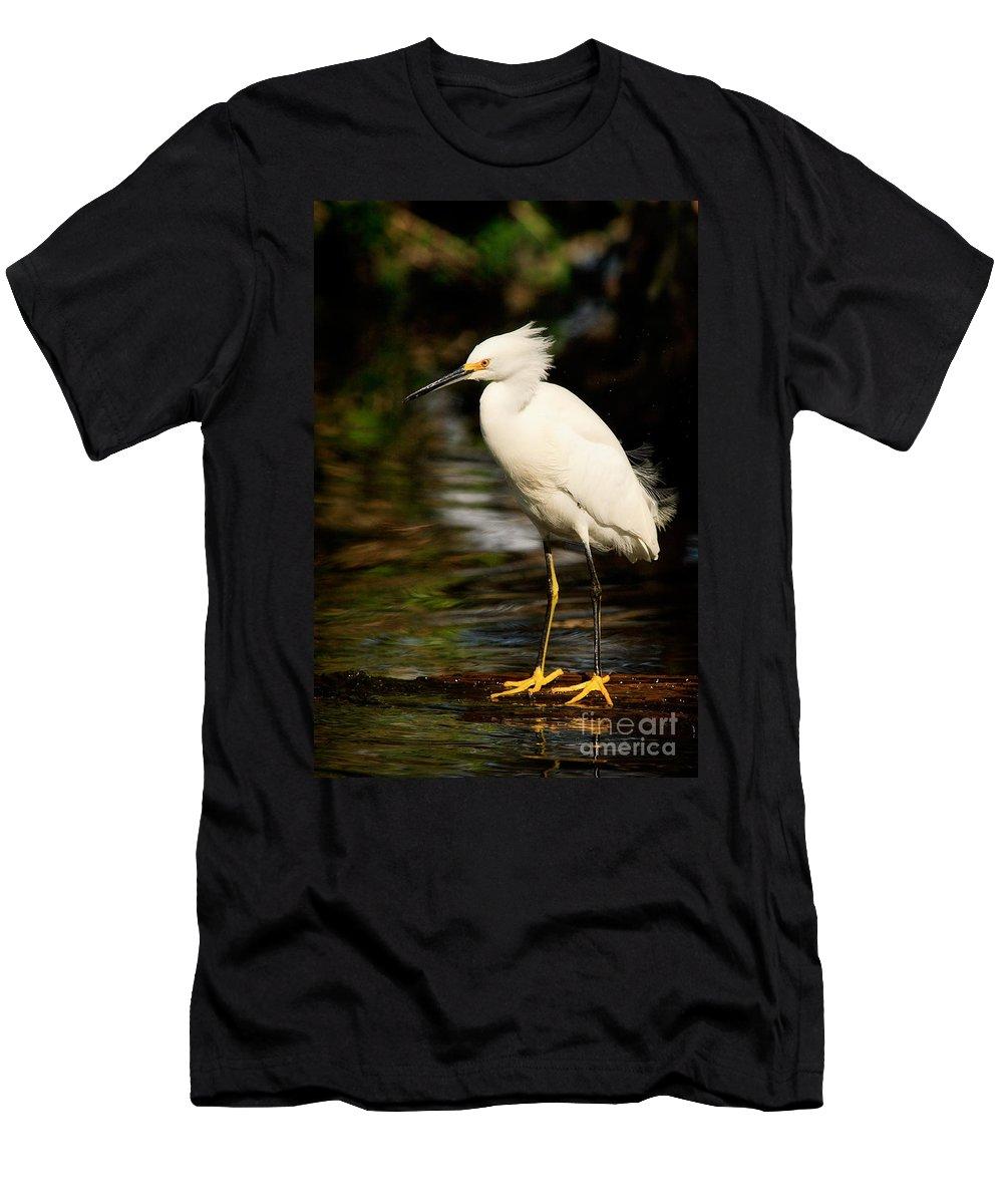 Immature Snowy Egret Men's T-Shirt (Athletic Fit) featuring the photograph Immature Snowy Egret by Matt Suess