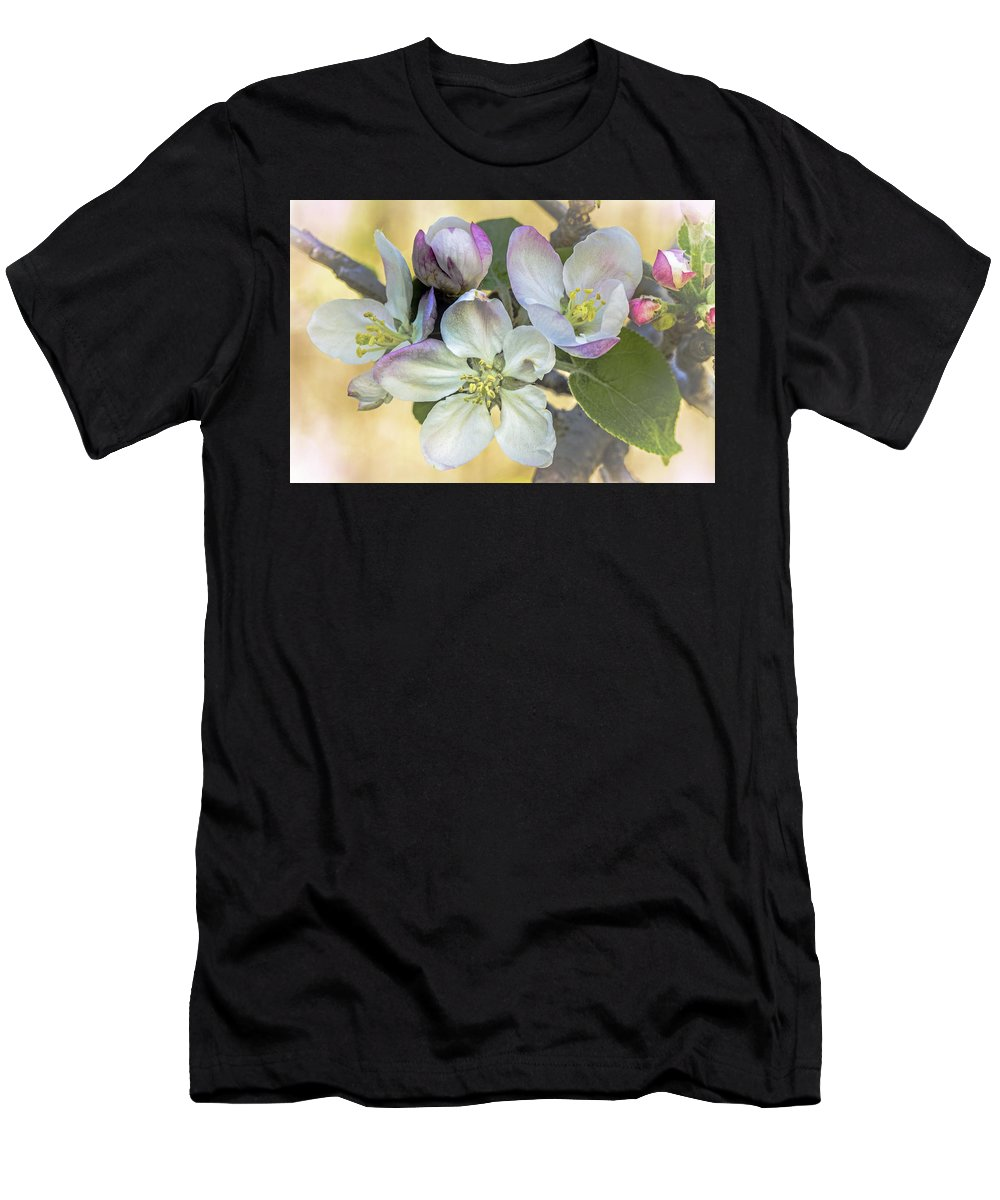 apple Blossoms Men's T-Shirt (Athletic Fit) featuring the photograph In Apple Blossom Time by Mother Nature