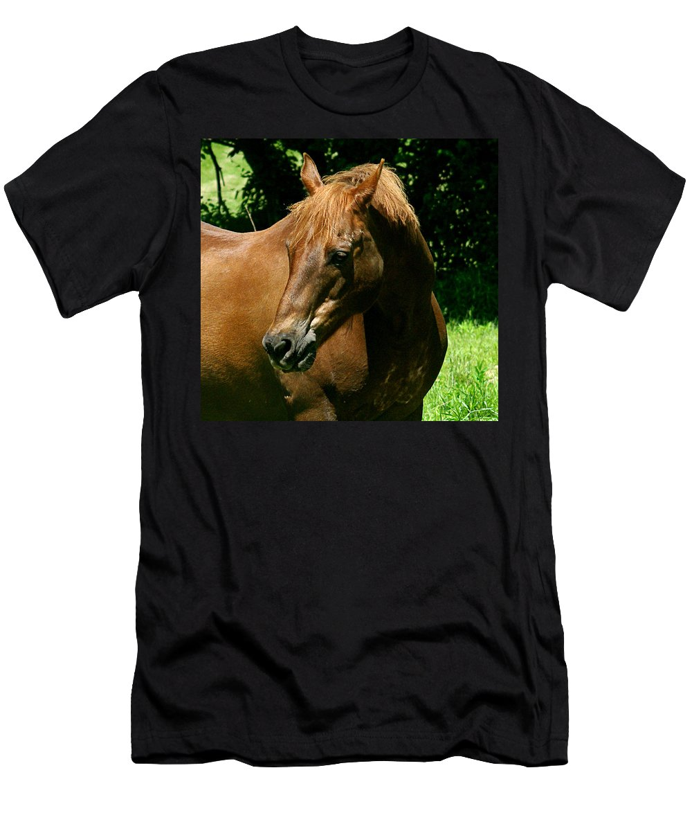jenny Gandert Rexx red Hot Rolexx Chestnut Light Pasture Sun Shadows Darks Head Copper Men's T-Shirt (Athletic Fit) featuring the photograph In The Light by Jenny Gandert