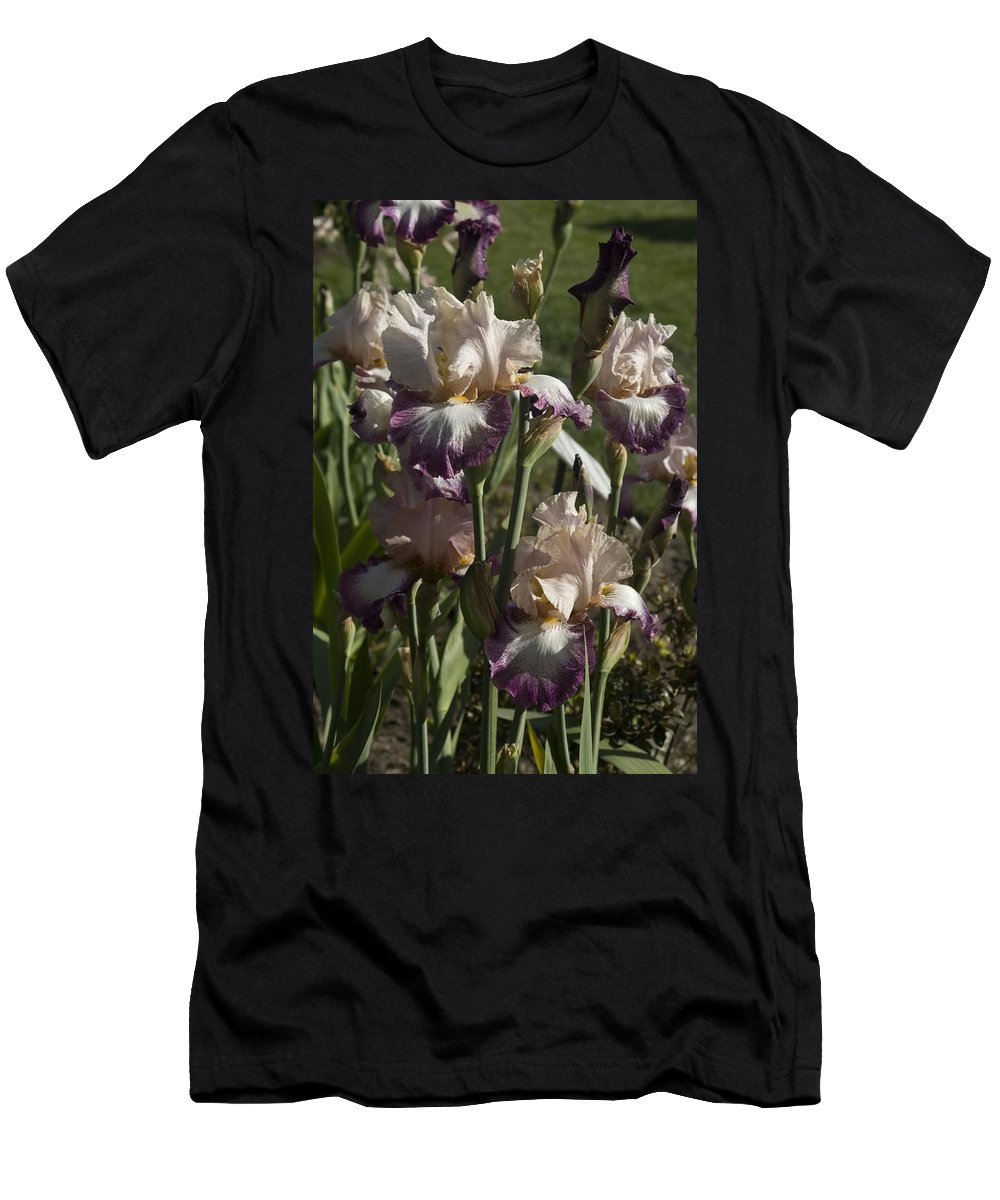Iris Men's T-Shirt (Athletic Fit) featuring the photograph Iris 3 by Sara Stevenson