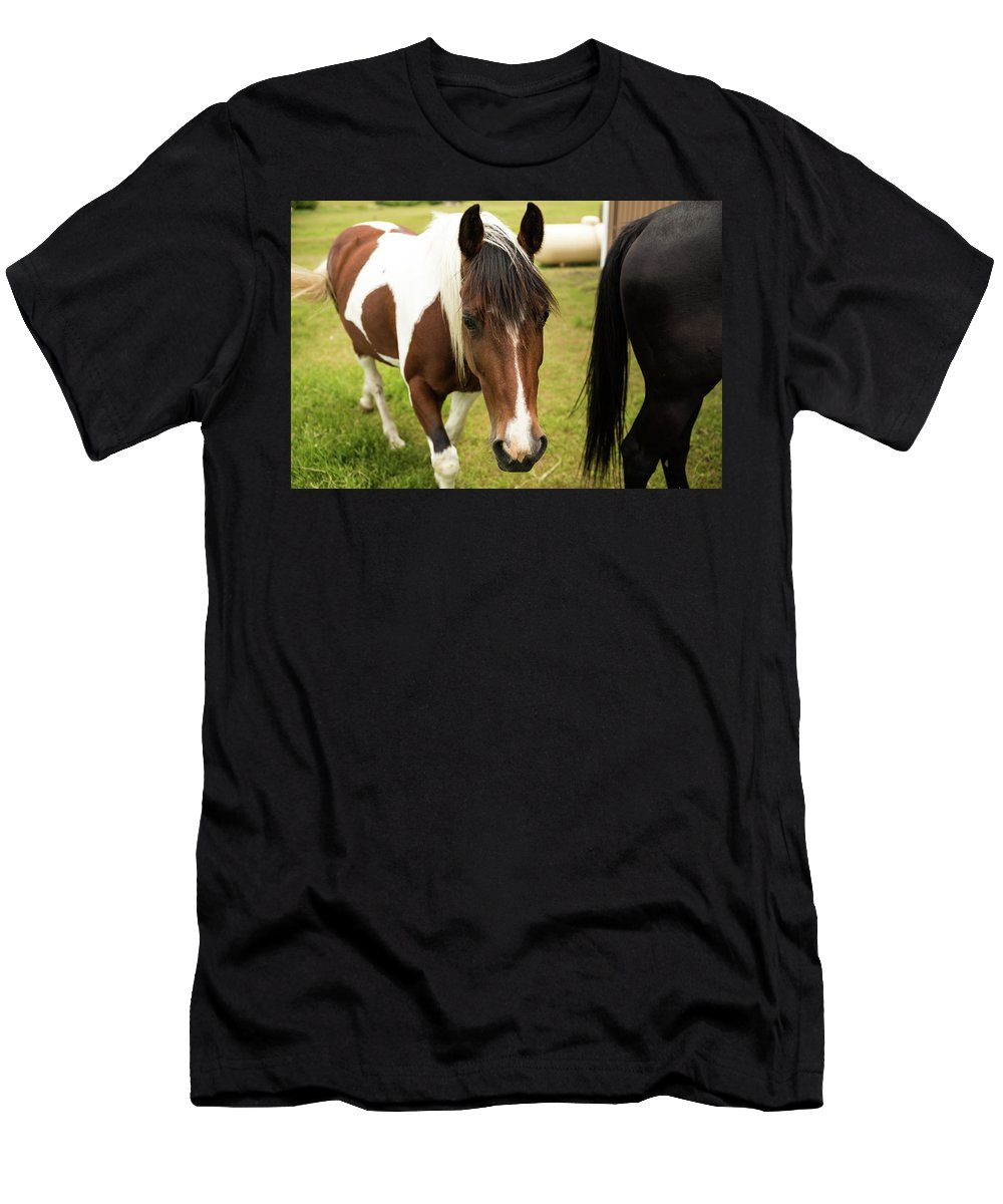 Pinto Men's T-Shirt (Athletic Fit) featuring the photograph Is This My Best Side? by Tom Cochran