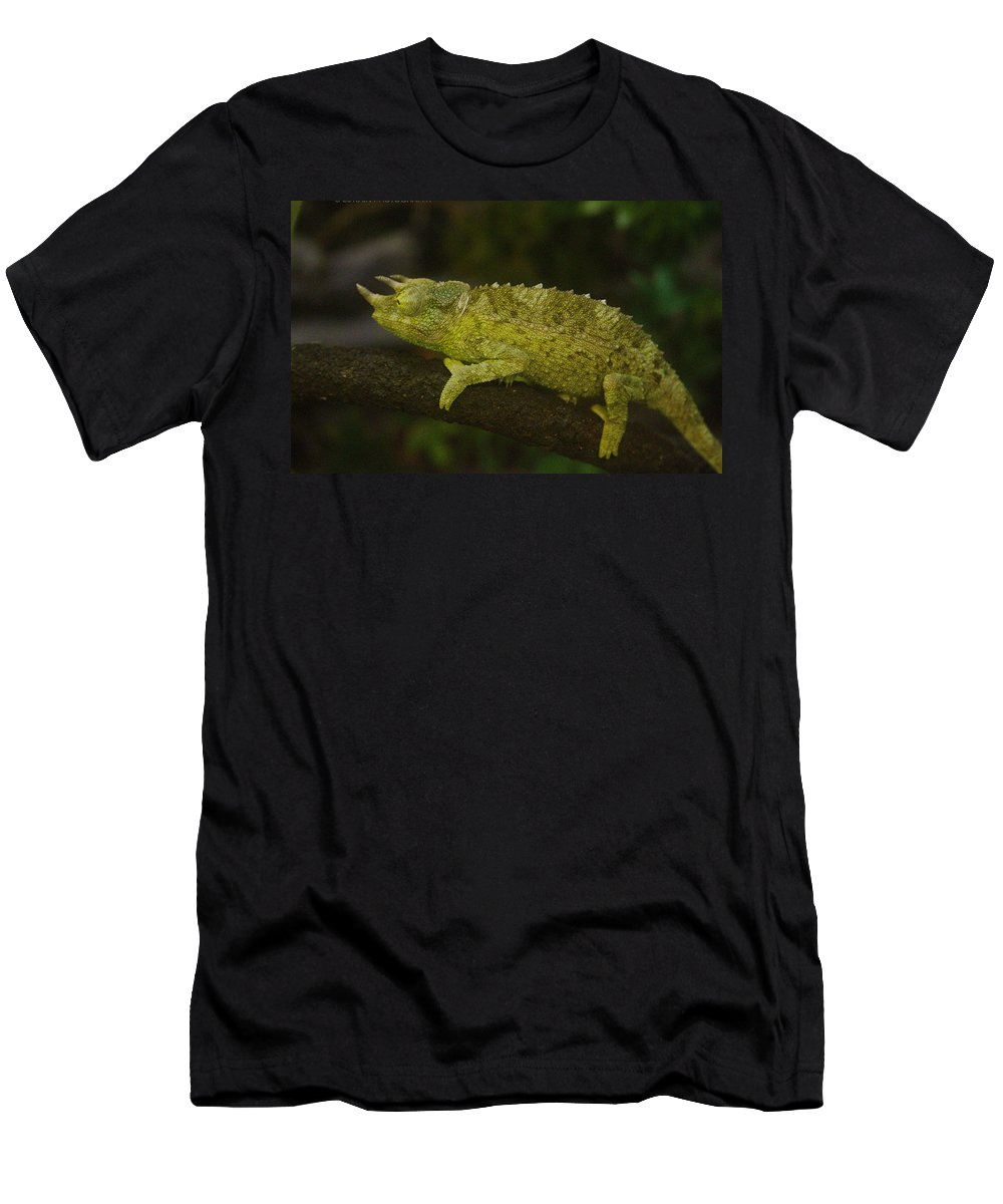 Jacksons Men's T-Shirt (Athletic Fit) featuring the photograph Jackson's Chameleon by Natalie Hood