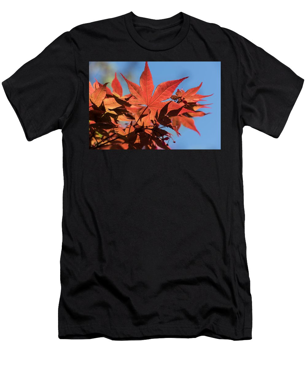 Cedar Park Men's T-Shirt (Athletic Fit) featuring the photograph Japanese Maple In Sunlight by JG Thompson