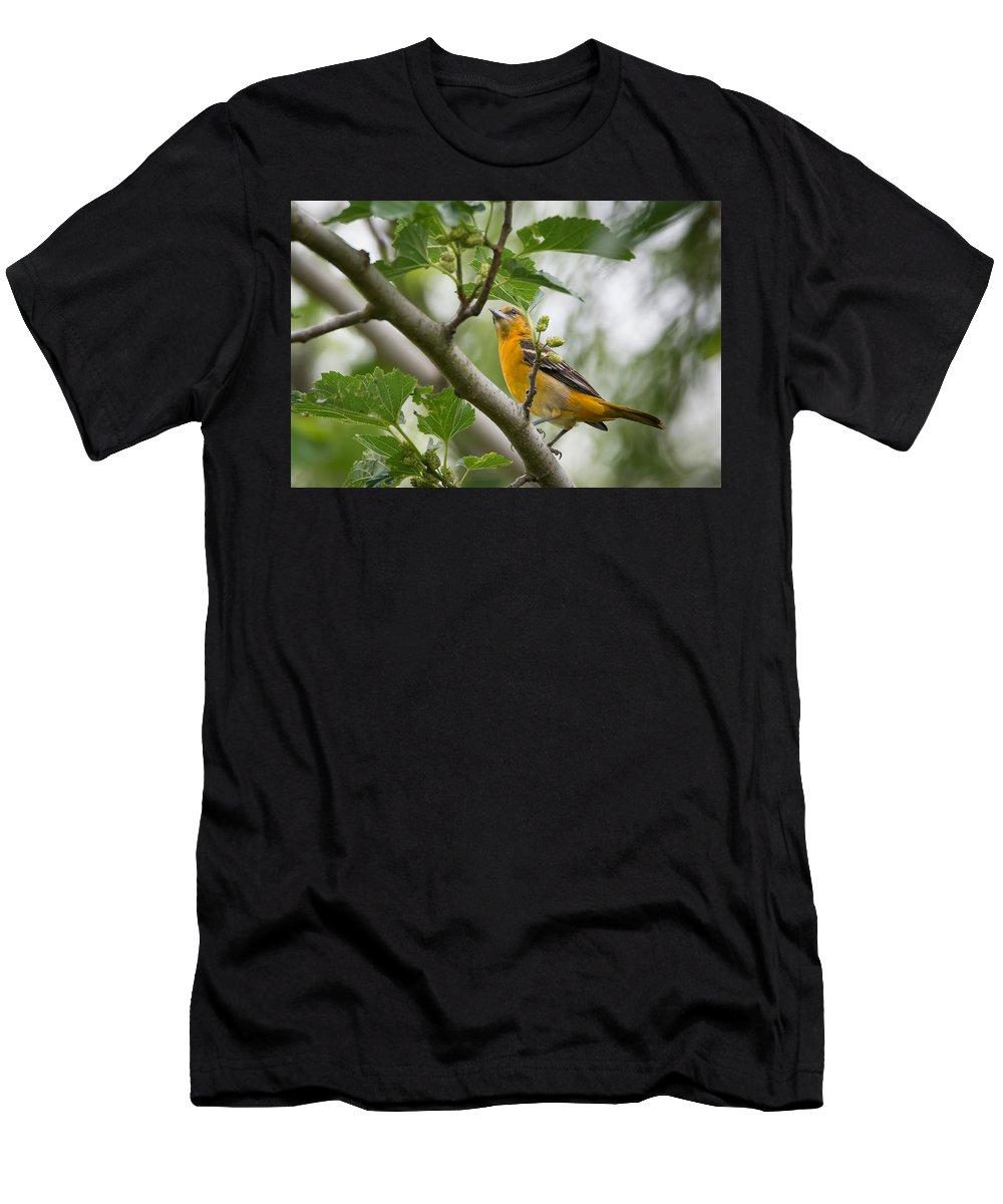 Just Passing Through Men's T-Shirt (Athletic Fit) featuring the photograph Just Passing Through by Debra Martz