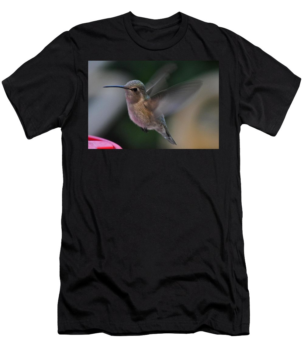 Hummingbirds Men's T-Shirt (Athletic Fit) featuring the photograph Juvenile Anna's Hummingbird Landing On Perch by Jay Milo