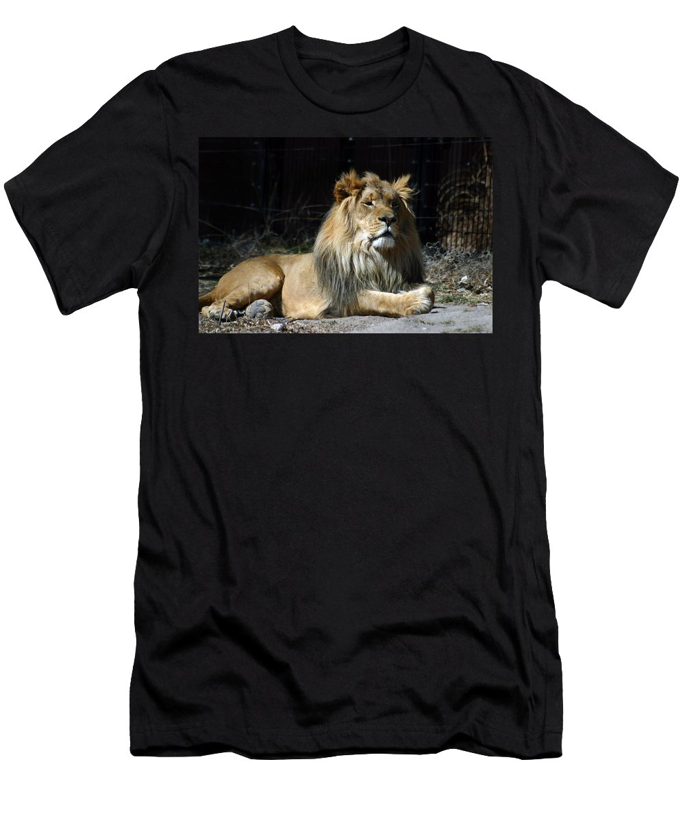 Lion Men's T-Shirt (Athletic Fit) featuring the photograph King by Anthony Jones
