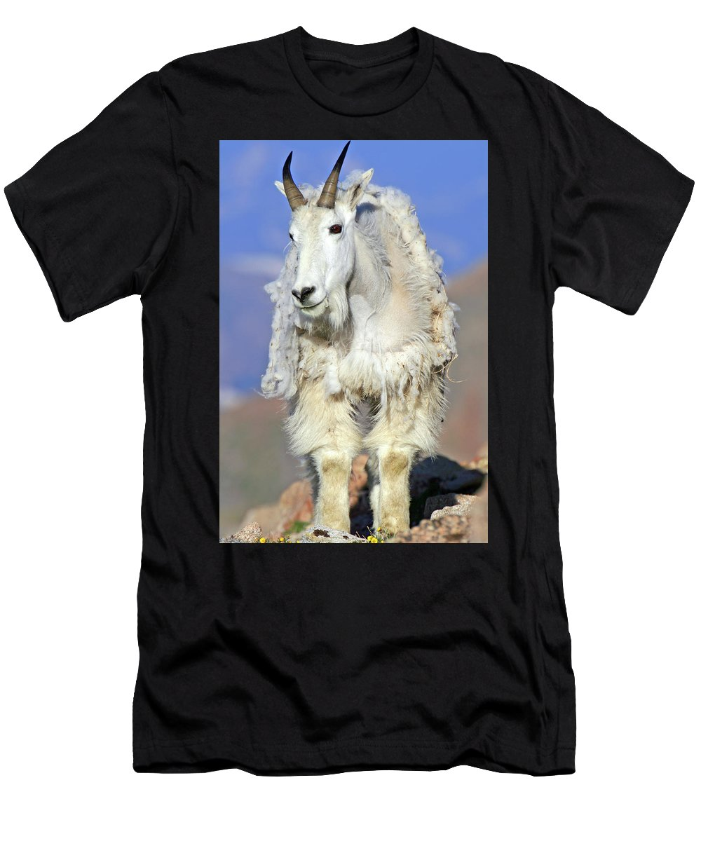 Goat Men's T-Shirt (Athletic Fit) featuring the photograph King Of The Mountain by Scott Mahon