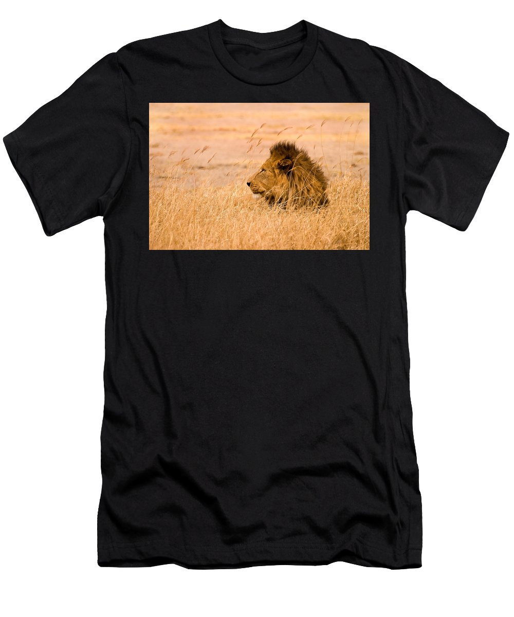 3scape Men's T-Shirt (Athletic Fit) featuring the photograph King Of The Pride by Adam Romanowicz