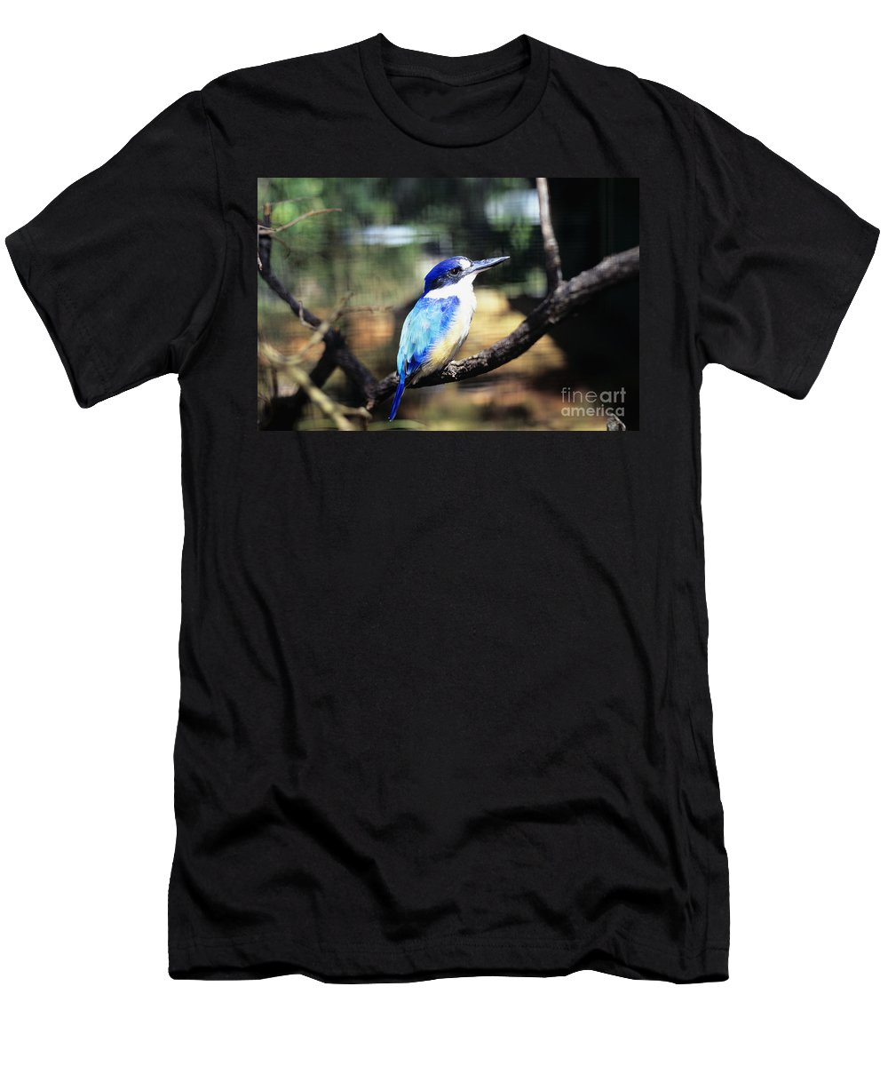 Animal Art Men's T-Shirt (Athletic Fit) featuring the photograph Kingfisher by Dave Fleetham - Printscapes