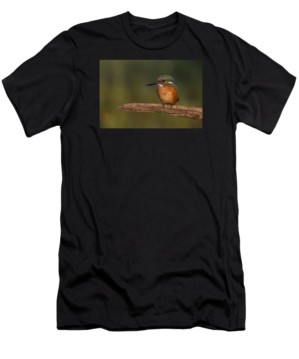 Kingfisher Men's T-Shirt (Athletic Fit) featuring the photograph Kingfisher On Sunrise by Veselin Gramatikov