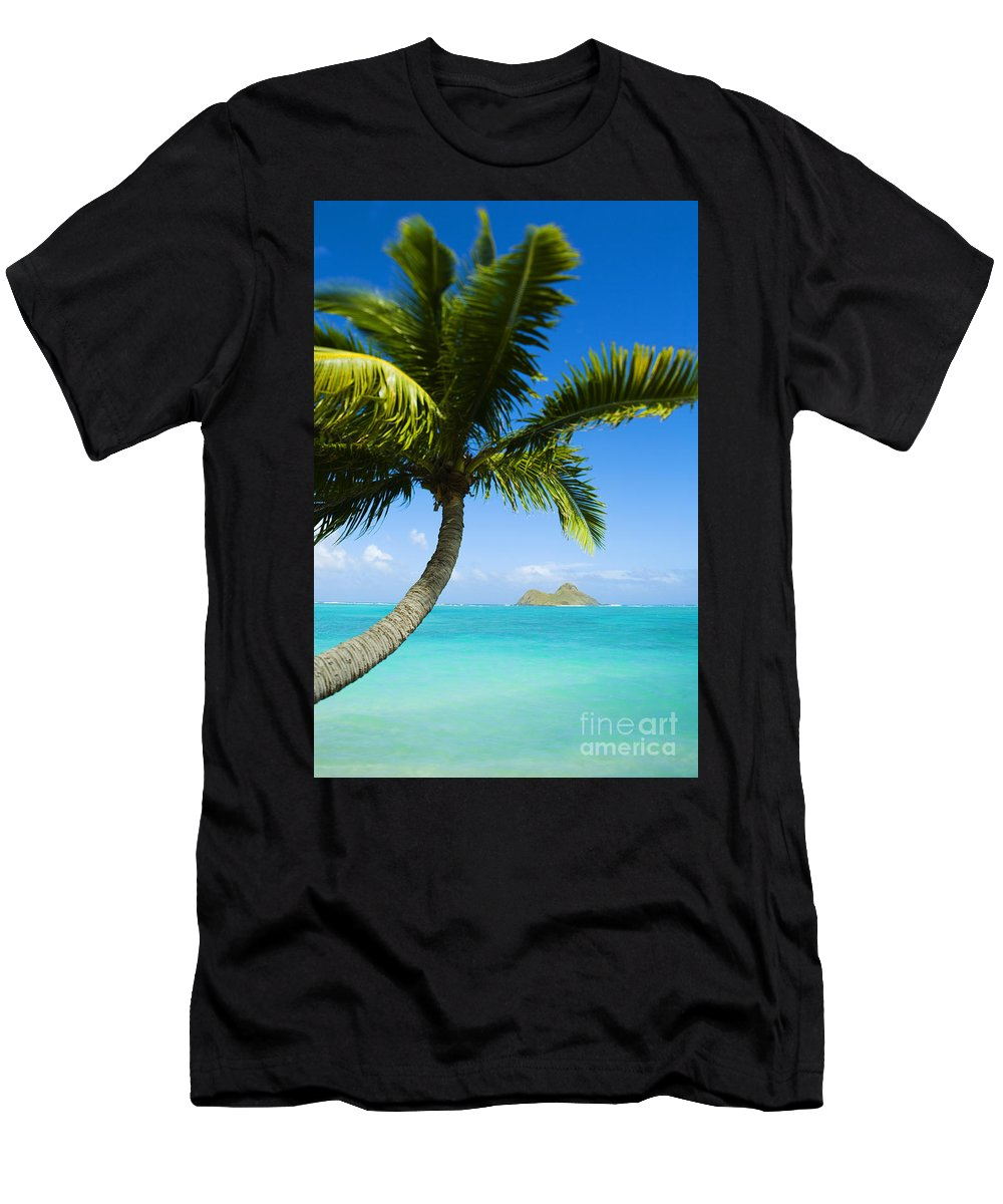 Afternoon Men's T-Shirt (Athletic Fit) featuring the photograph Lanikai Palm by Dana Edmunds - Printscapes