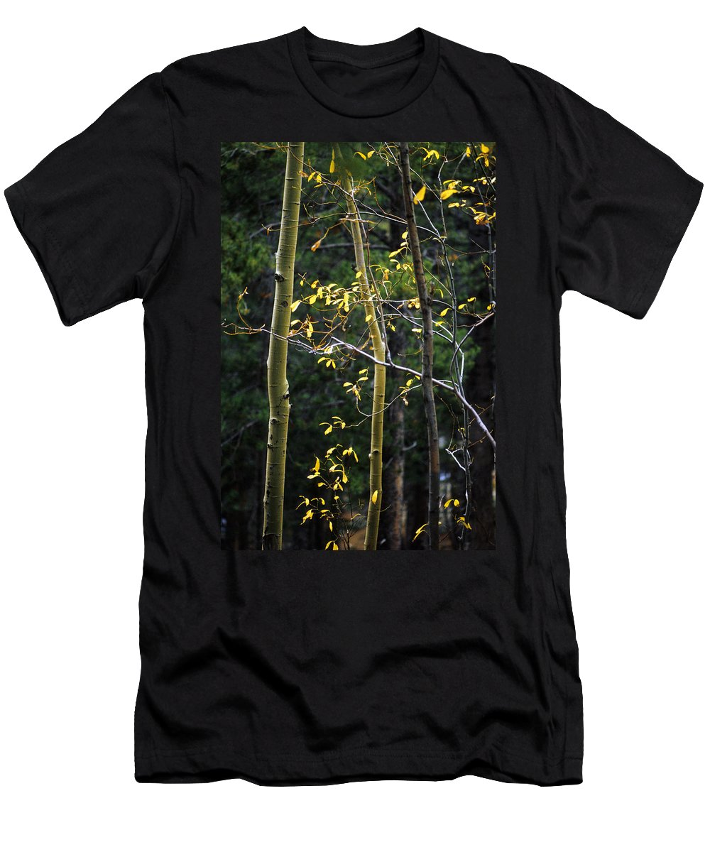 Aspen Men's T-Shirt (Athletic Fit) featuring the photograph Late Aspen by Jerry McElroy