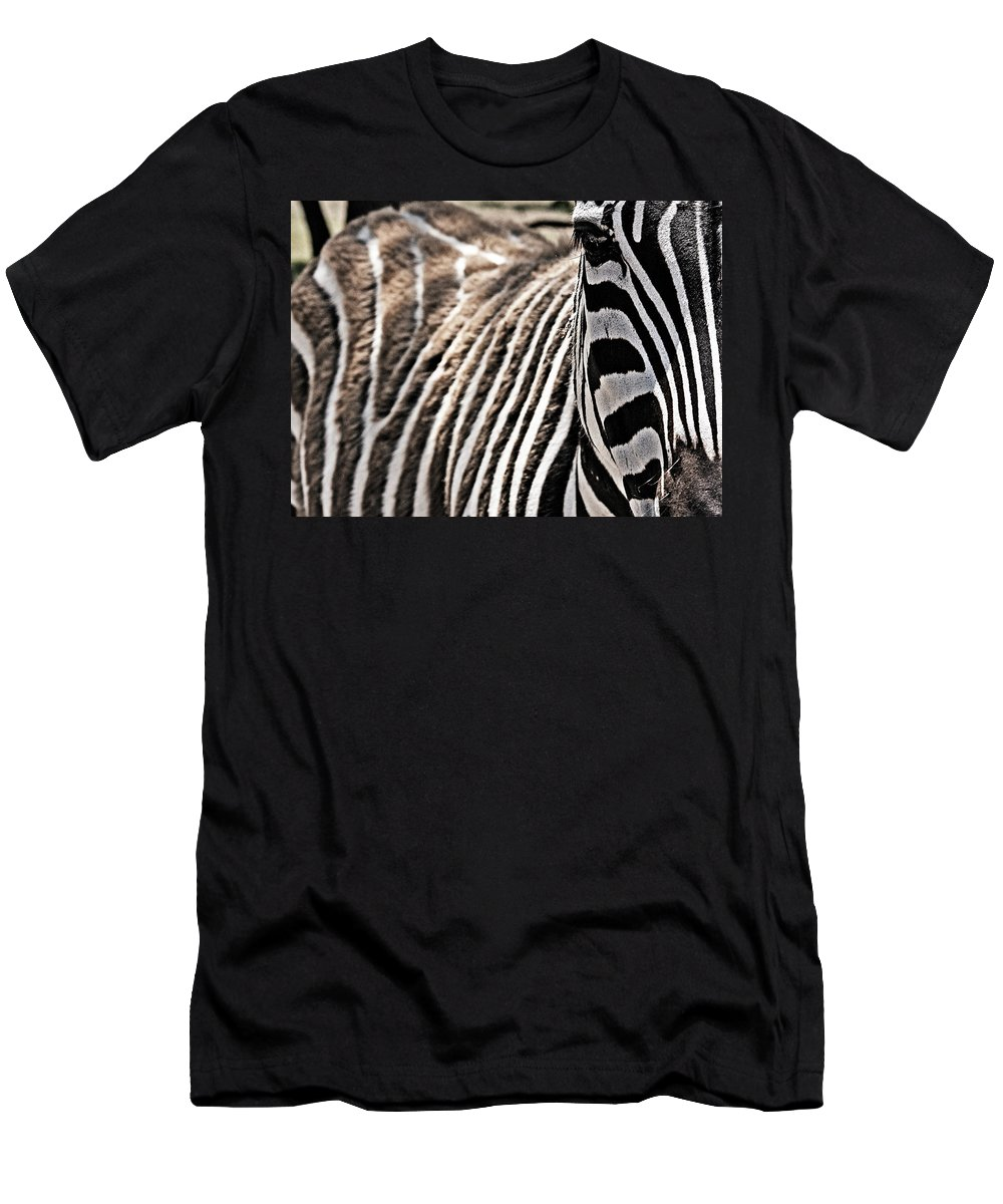 Zebra Men's T-Shirt (Athletic Fit) featuring the photograph Latter Half by Douglas Barnard