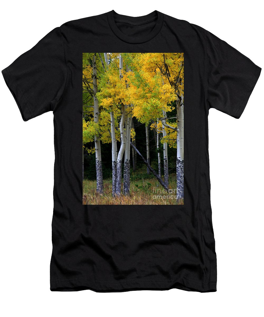Aspens Men's T-Shirt (Athletic Fit) featuring the photograph Leaning Aspen by Timothy Johnson