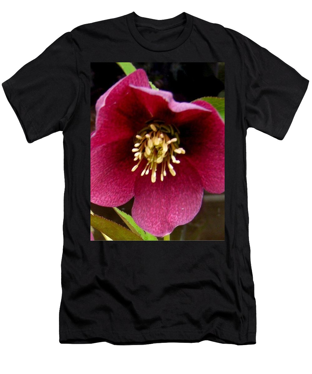 Lenten Rose Men's T-Shirt (Athletic Fit) featuring the photograph Lenten Rose by Sandra Maddox
