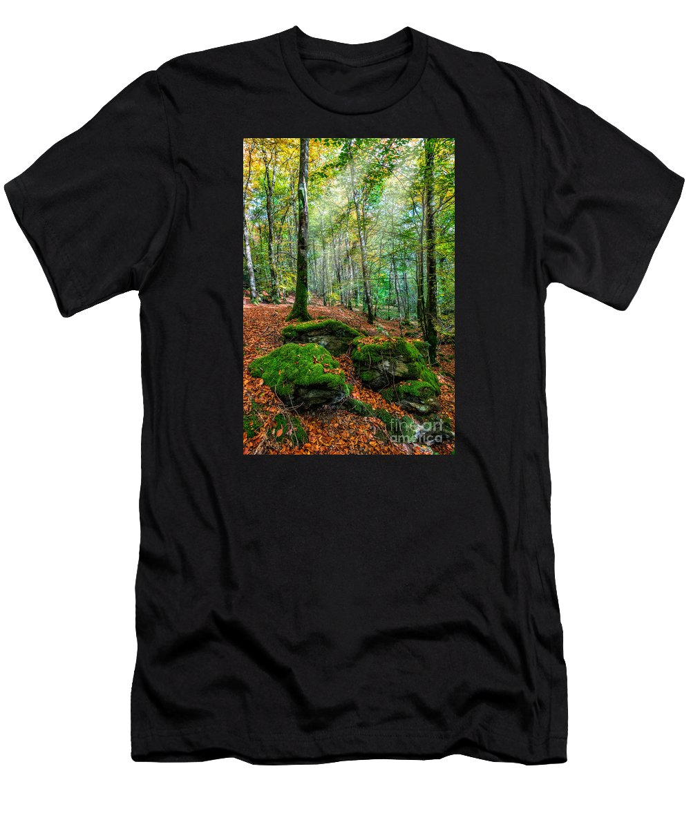 Autumn Men's T-Shirt (Athletic Fit) featuring the photograph Light In The Forest by Adrian Evans