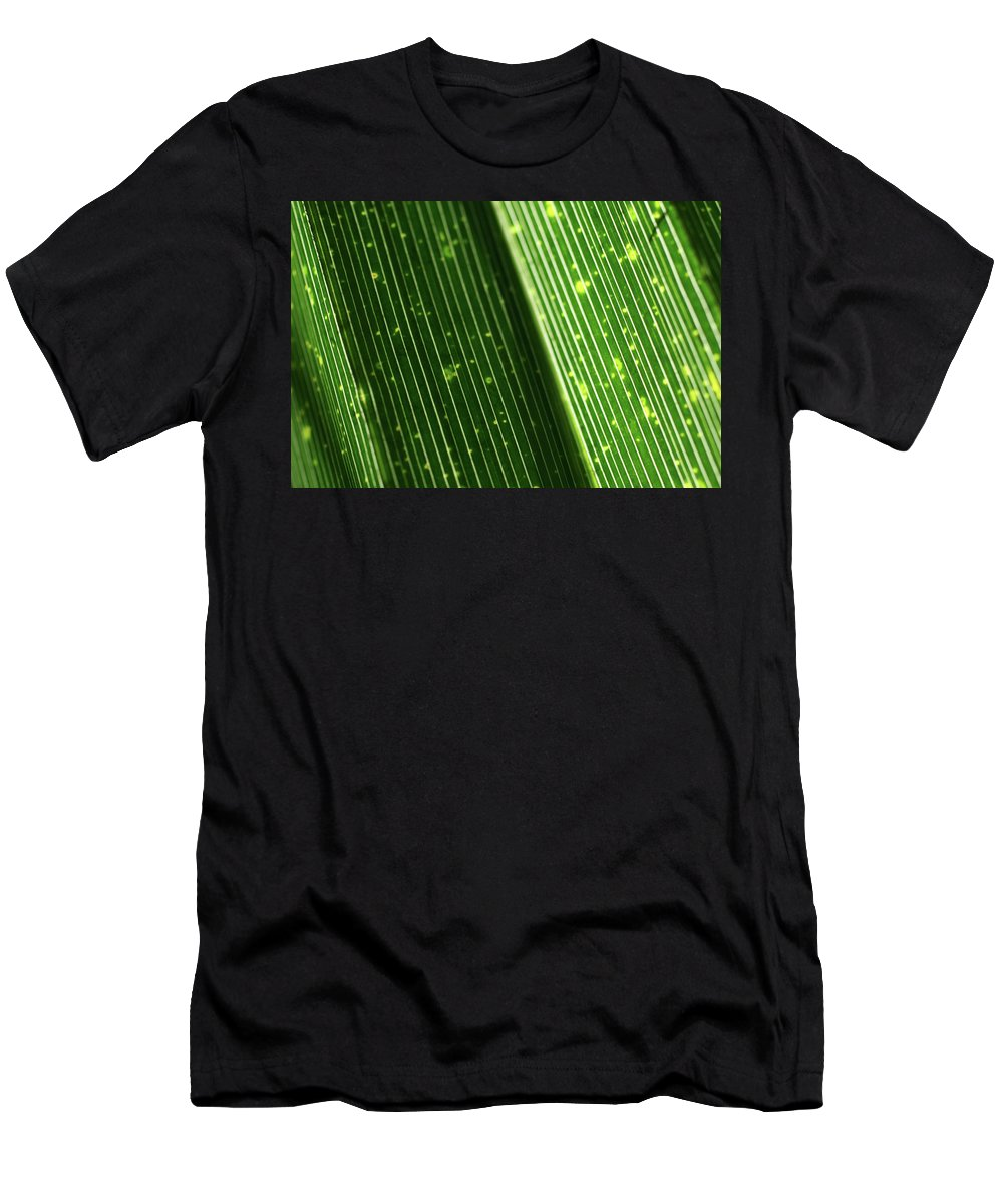 Close-up Photo Photography Flower Plant Palm Frond Green Backlit Men's T-Shirt (Athletic Fit) featuring the photograph Light Shining Through Palm Frond by Christina Geiger