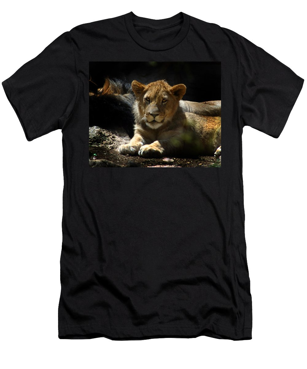 Lions Men's T-Shirt (Athletic Fit) featuring the photograph Lion Cub by Anthony Jones