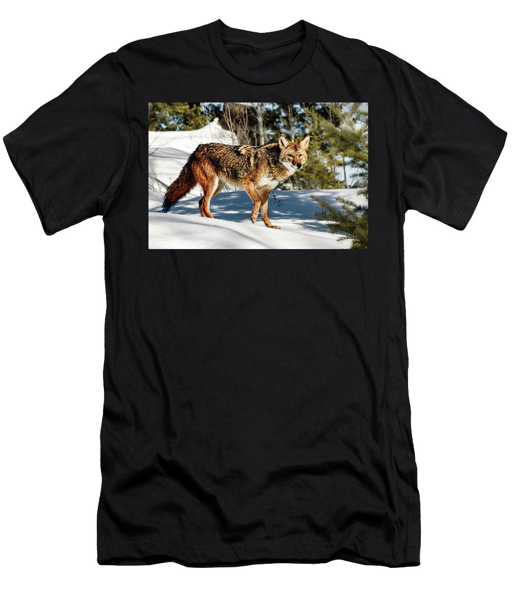 Locked And Loaded Men's T-Shirt (Athletic Fit) featuring the photograph Locked And Loaded by Janet Ballard