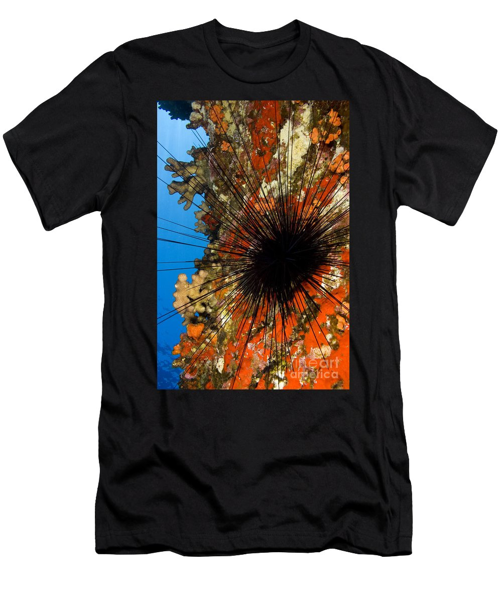 Animal Art Men's T-Shirt (Athletic Fit) featuring the photograph Longspined Sea Urchin by Dave Fleetham - Printscapes