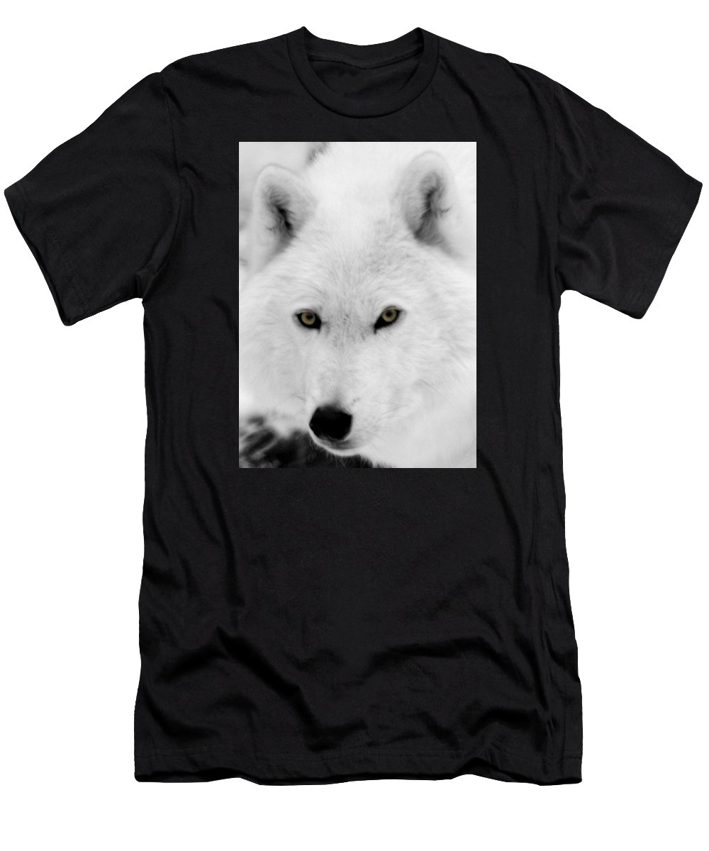 Arctic Wolf Men's T-Shirt (Athletic Fit) featuring the photograph Look Into My Eyes by Larry Ricker