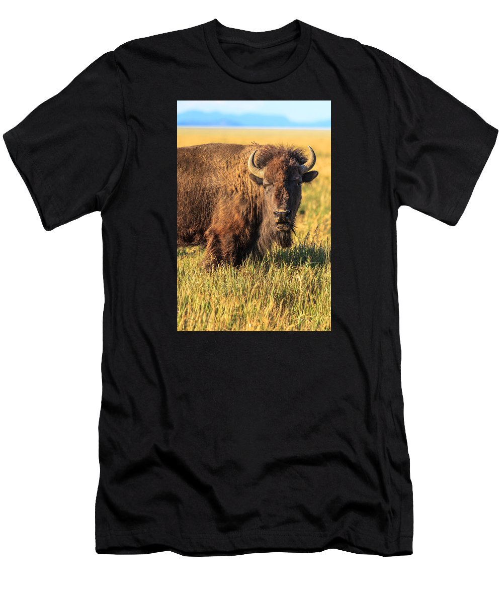 Grand Teton National Park Men's T-Shirt (Athletic Fit) featuring the photograph Looking At You by Prashant Thumma