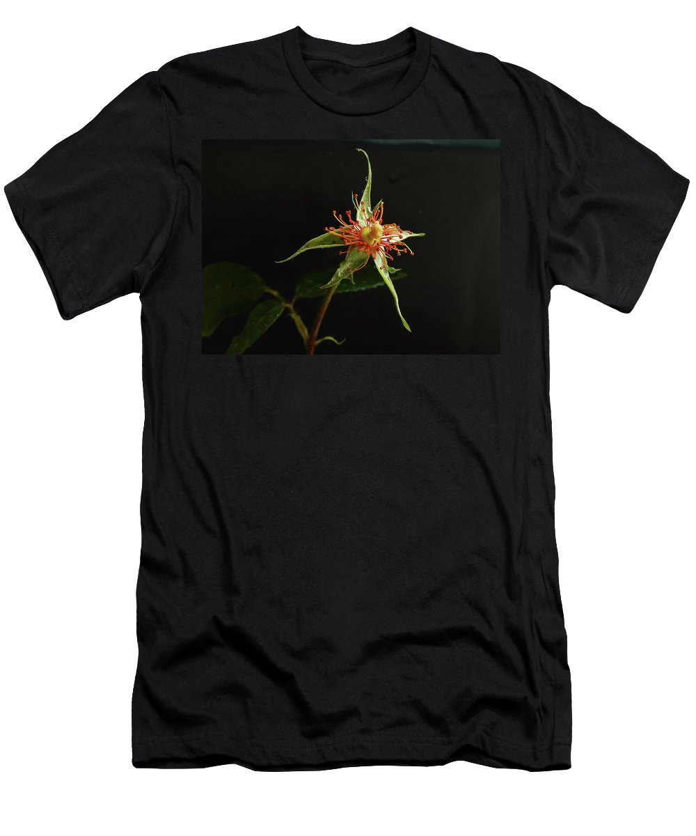 Rose Men's T-Shirt (Athletic Fit) featuring the photograph Lost Beauty by Jeff Townsend