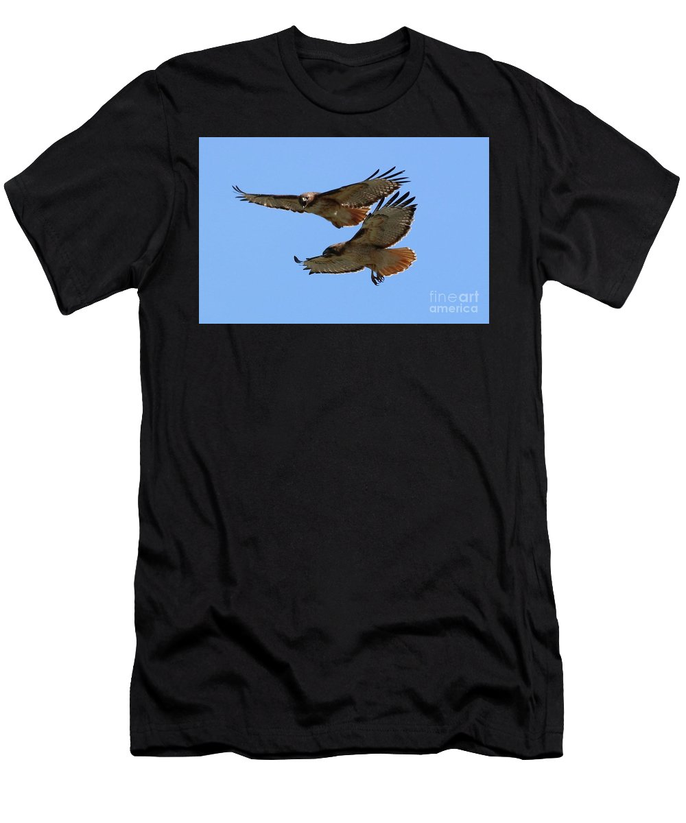 Red-tailed Hawk Men's T-Shirt (Athletic Fit) featuring the photograph Courtship Love Is In The Air by Angela Koehler