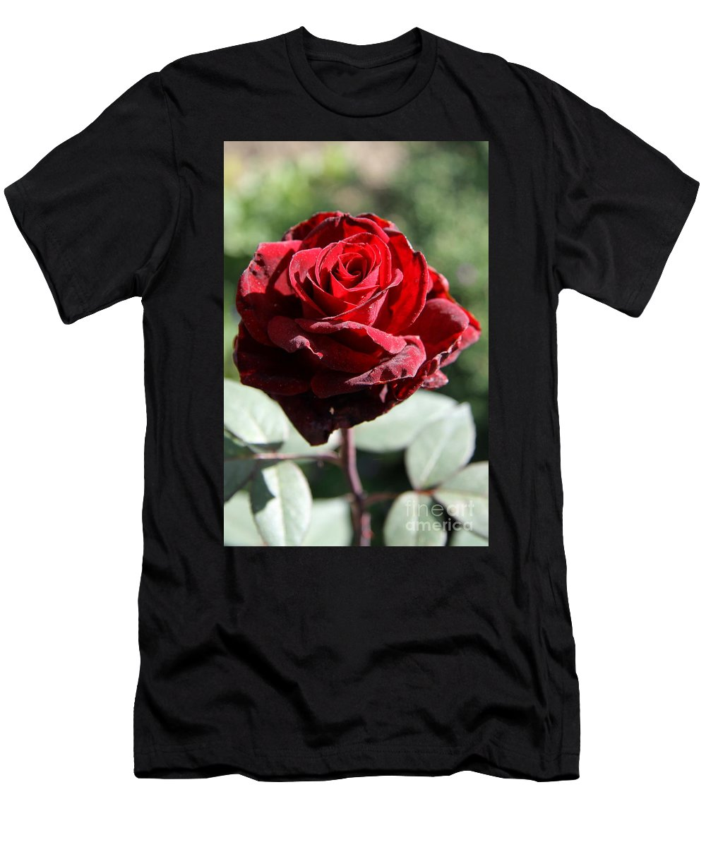 Rose Men's T-Shirt (Athletic Fit) featuring the photograph Love You More by Christiane Schulze Art And Photography