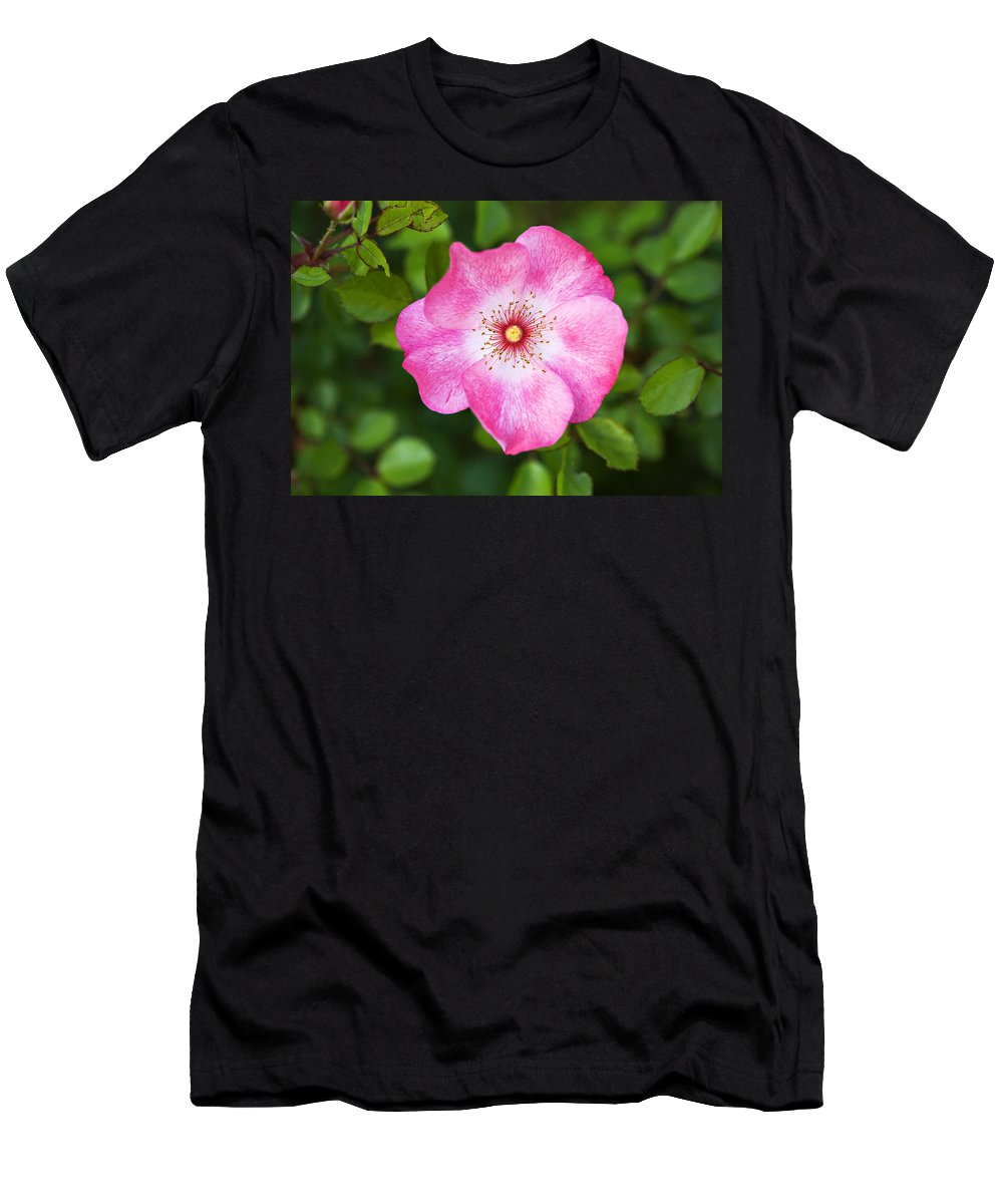 Pink Men's T-Shirt (Athletic Fit) featuring the photograph Lovely Pink Rose by Marilyn Hunt