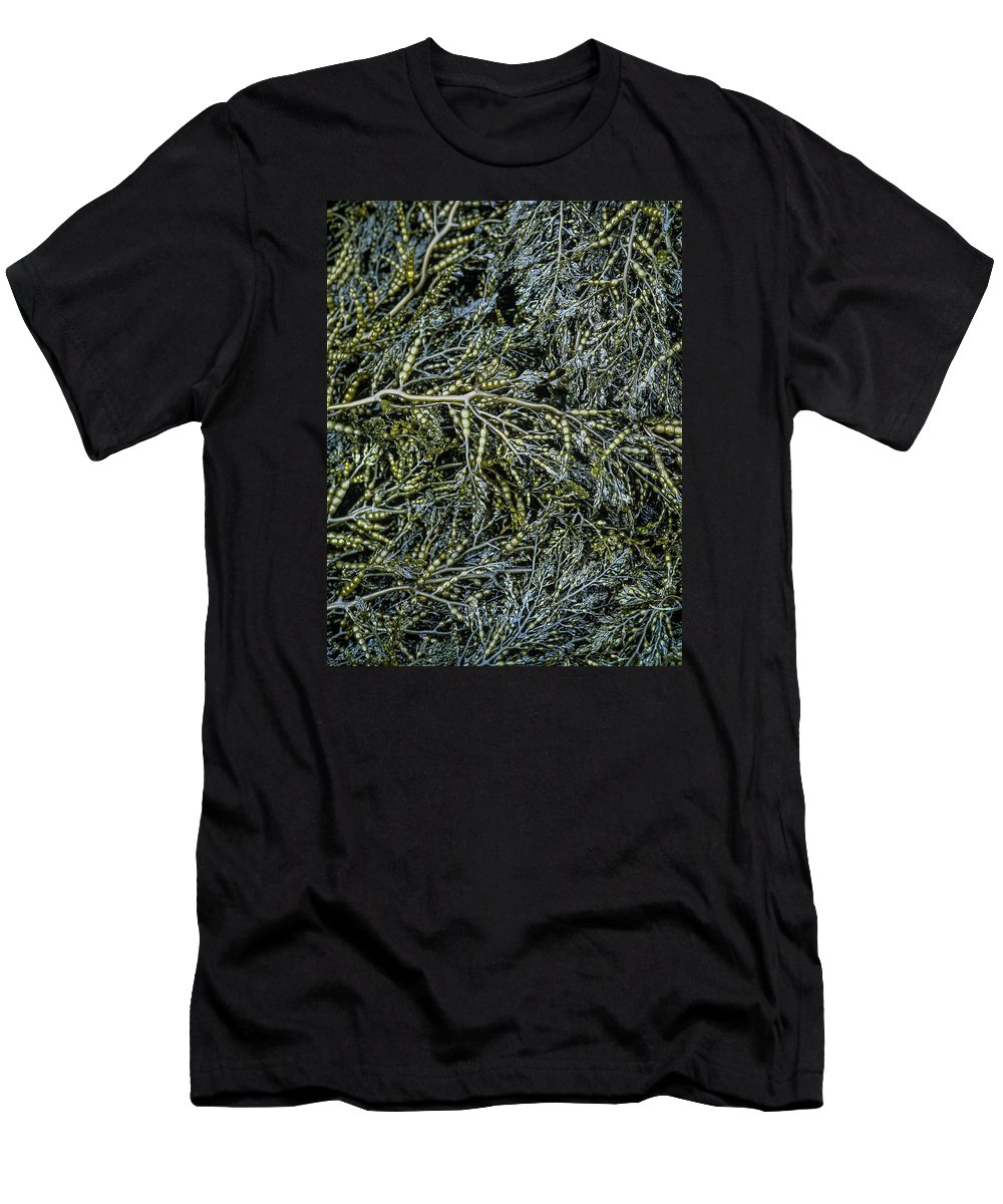 Algae Men's T-Shirt (Athletic Fit) featuring the photograph Low Tide Seaweed by Robert Potts