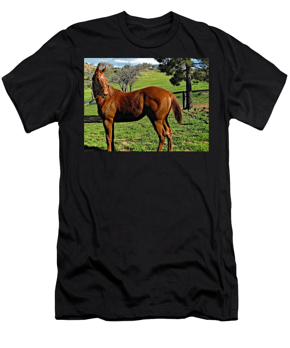 Horse Men's T-Shirt (Athletic Fit) featuring the photograph Lucky Student by Steve Harrington