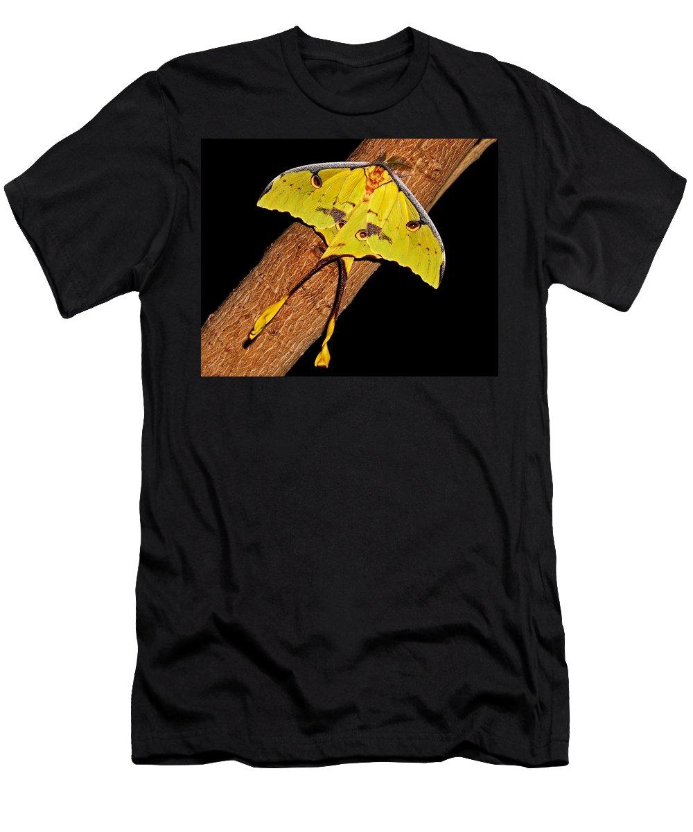 Luna Moth Men's T-Shirt (Athletic Fit) featuring the photograph Luna Moth by Judy Vincent
