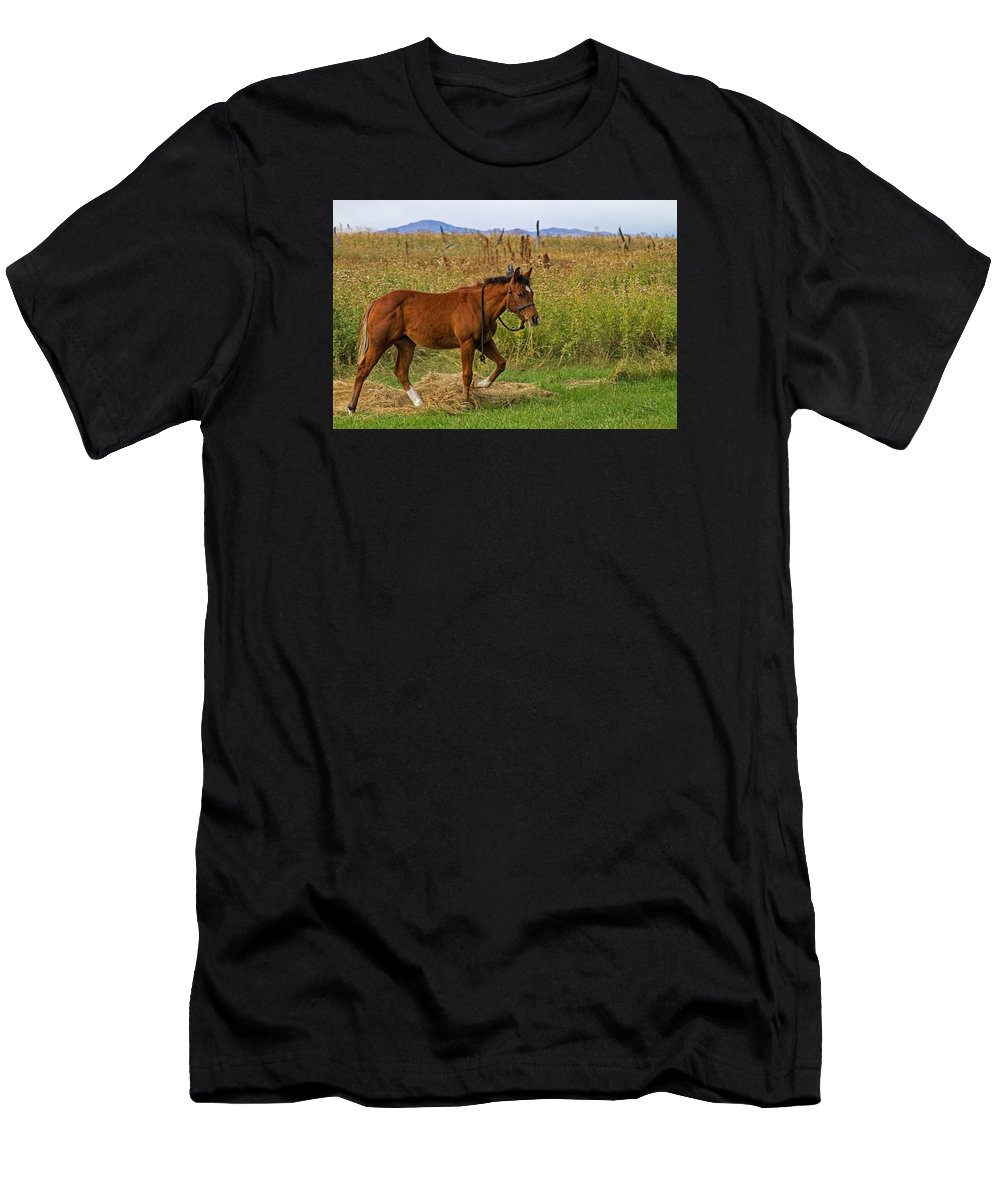 Horse T-Shirt featuring the photograph Lunch Break by Alana Thrower