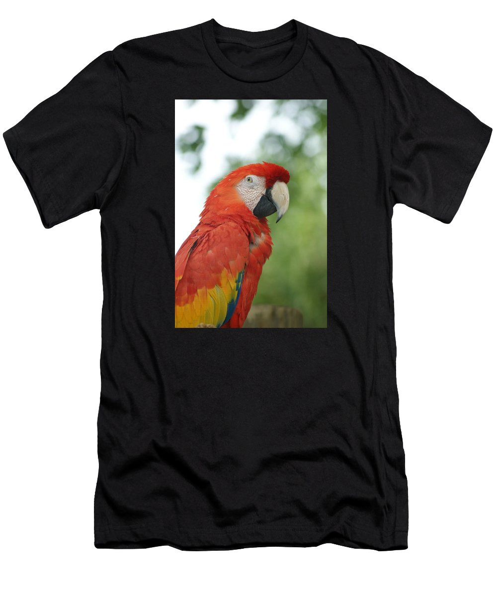 Parrot Men's T-Shirt (Athletic Fit) featuring the photograph Macraw by Heidi Poulin