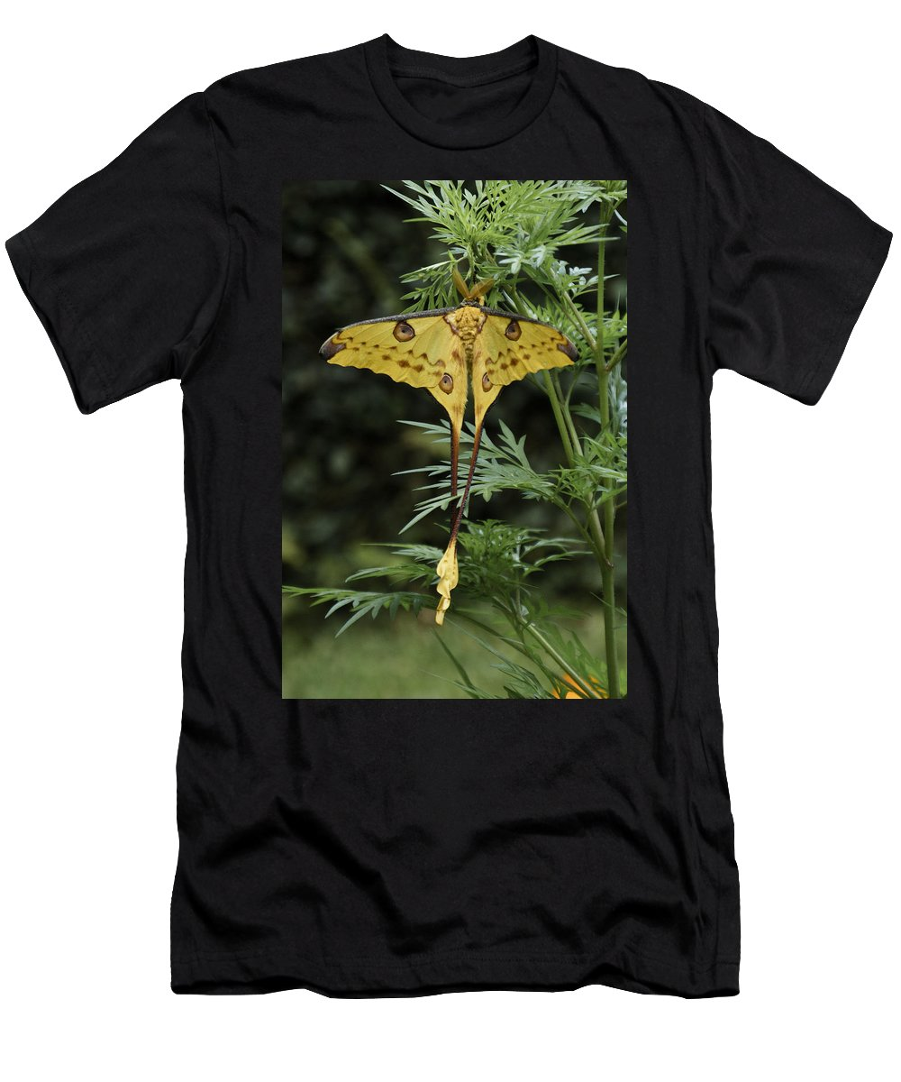 Madagascar Men's T-Shirt (Athletic Fit) featuring the photograph Madagascar Comet Moth by Michele Burgess