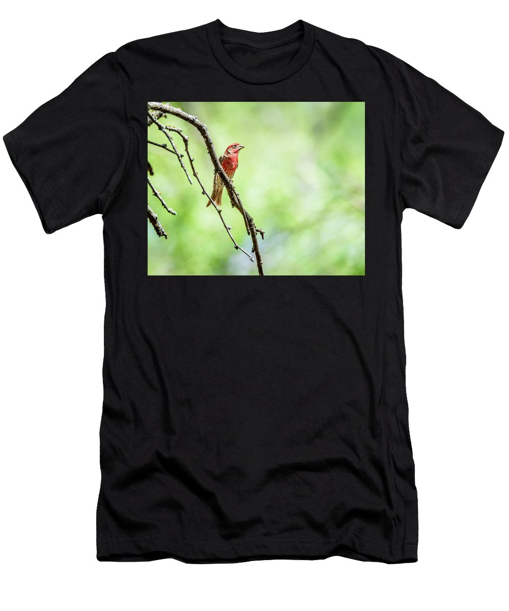 House Finch Men's T-Shirt (Athletic Fit) featuring the photograph Male House Finch Out On A Limb by Debra Martz